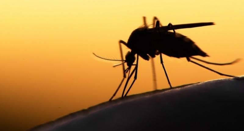 Biting-mosquito-via-Shutterstock-e1435155897621-800x430