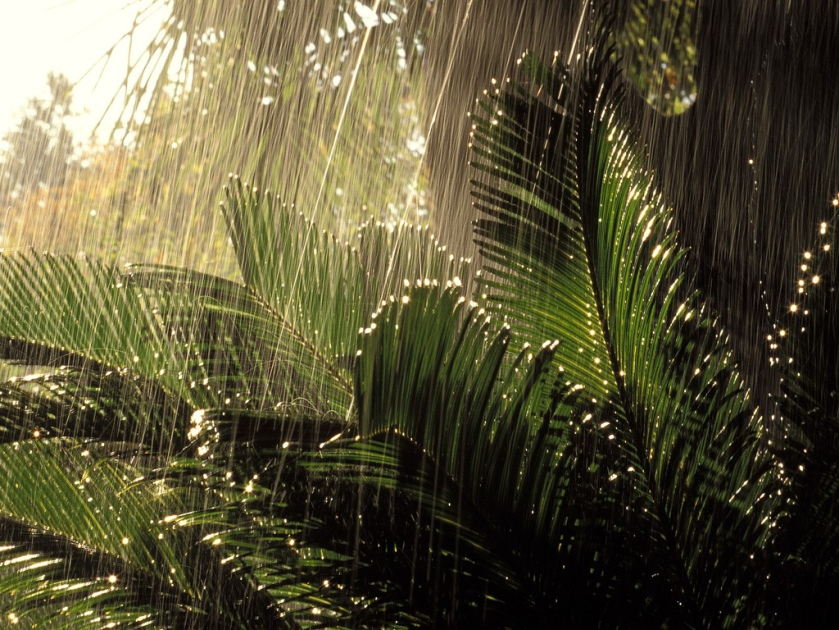 rain-in-jungle
