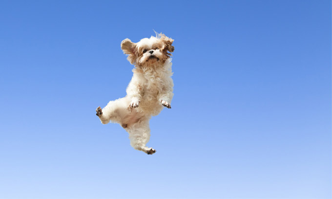 file_21621_dogs-jumping-for-joy-18